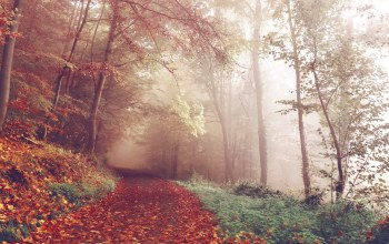 path,foggy,leaves,woods,forest,fall,trees,fog,autumn,trail