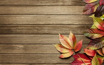 wood,leaves,autumn