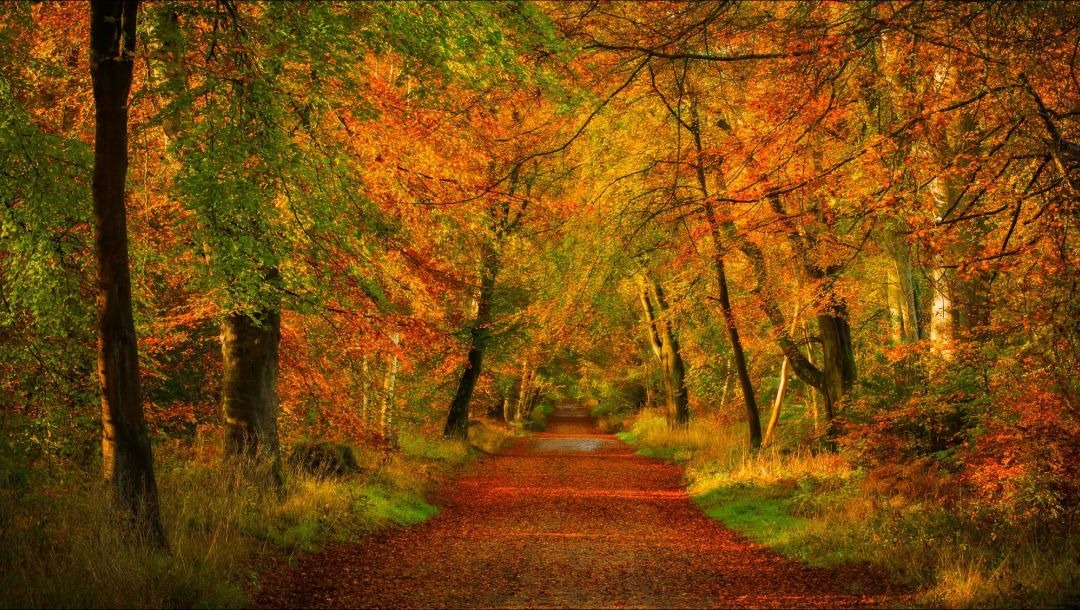 trees,colorful,forest,autumn,park,walk,path,Road,leaves,colors,fall