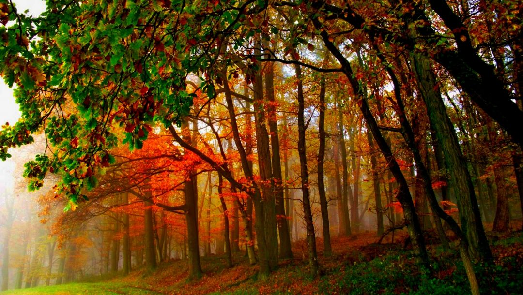 walk,forest,path,leaves,Road,fall,colorful,autumn,trees,colors,park
