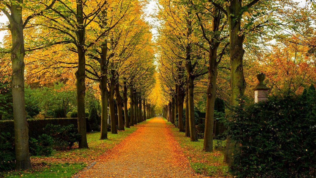 walk,colorful,trees,park,colors,Road,fall,leaves,forest,autumn,path