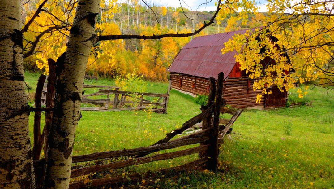 forest,leaves,colors,trees,fall,colorful,autumn,walk,house