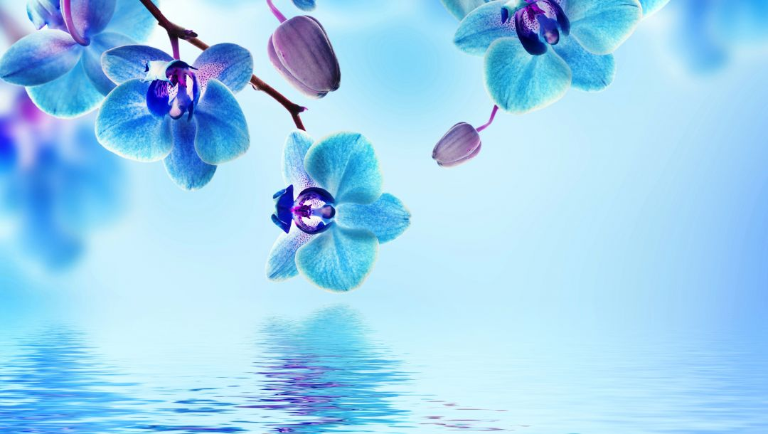 water,Orchid,Вода,цветы,blue,reflection,орхидея,beautiful