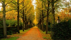 walk,colorful,nature,trees,park,листья,colors,Road,fall,leaves,forest,autumn,path