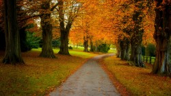 park,trees,colorful,forest,colors,autumn,Road,leaves,fall,path,walk