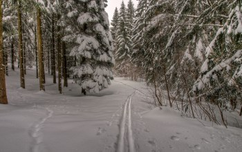 snow,forest,frost,winter,path,trees,Мороз