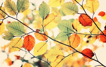 leaves,colors,herbst,Colorful autumn,sky
