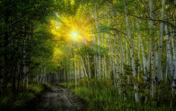 colorful,birches,rays,leaves,fall,path,forest,Sunset,Road,trees,autumn