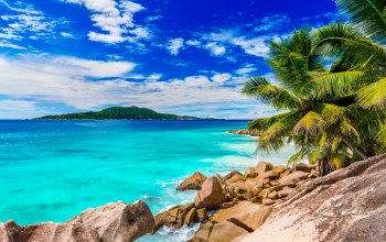 tropical,sand,summer,beach,palms,shore,paradise