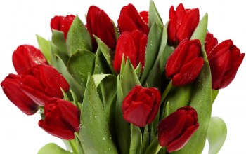 bright,яркие,Red,Bouquet,beauty,tulips,petals,цветы