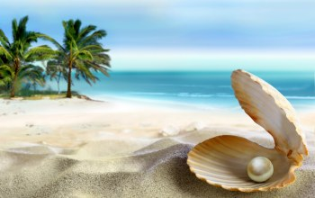 beach,sand,paradise,emerald,summer,coast,blue,palm,tropical,perl,ocean,Seashell