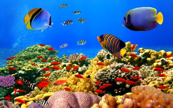 ocean,tropical,fishes,underwater,подводный мир,coral,reef