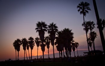 palm,vennice beach,los angeles,summer,Sunset,california