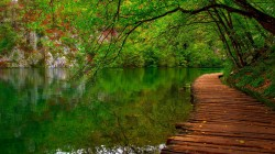 river,leaves,colorful,forest,park,spring,colors,fall,water,trees,walk,nature