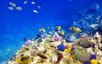 tropical,coral,подводный мир,fishes,World,reef,ocean,underwater