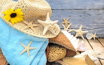 starfishes,beach,ракушки,wood,sand,Seashells