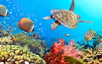 ocean,tropical,fishes,reef,coral,underwater,подводный мир
