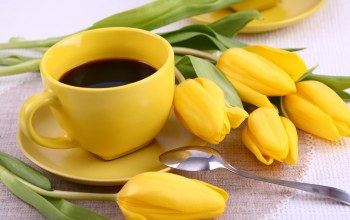 yellow,кофе,цветы,cup,breakfast,tulips,coffee