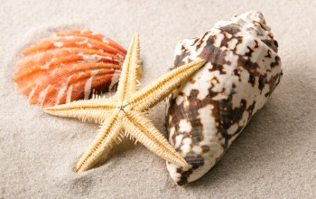 starfish,sand,Seashells,beach,ракушки