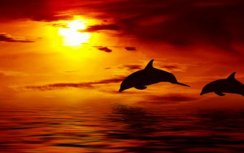ocean,Sunset,clouds,красивые,beautiful,dolphin,sky,jumping up