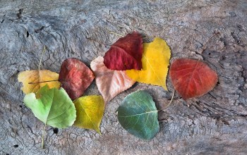 autumn,leaves,autumnal colors,fall