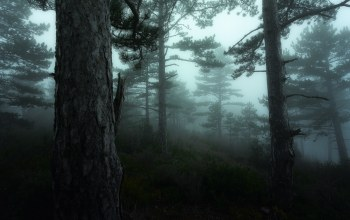 france,fog,provence,forest,mood,bonnieux,David bouscarle,mist,luberon