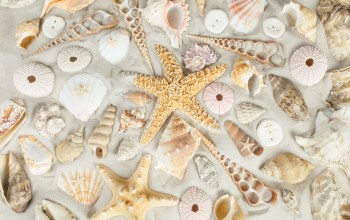 starfish,Seashells,ракушки,sand
