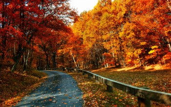 forest,fall,colors,Road,colorful,park,autumn,walk,path,trees,leaves