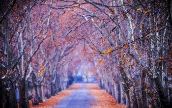 Road,autumn,colors,colorful,fall,park,trees,walk,path,forest,leaves