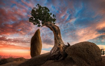 Joshua tree,california,america,скалы