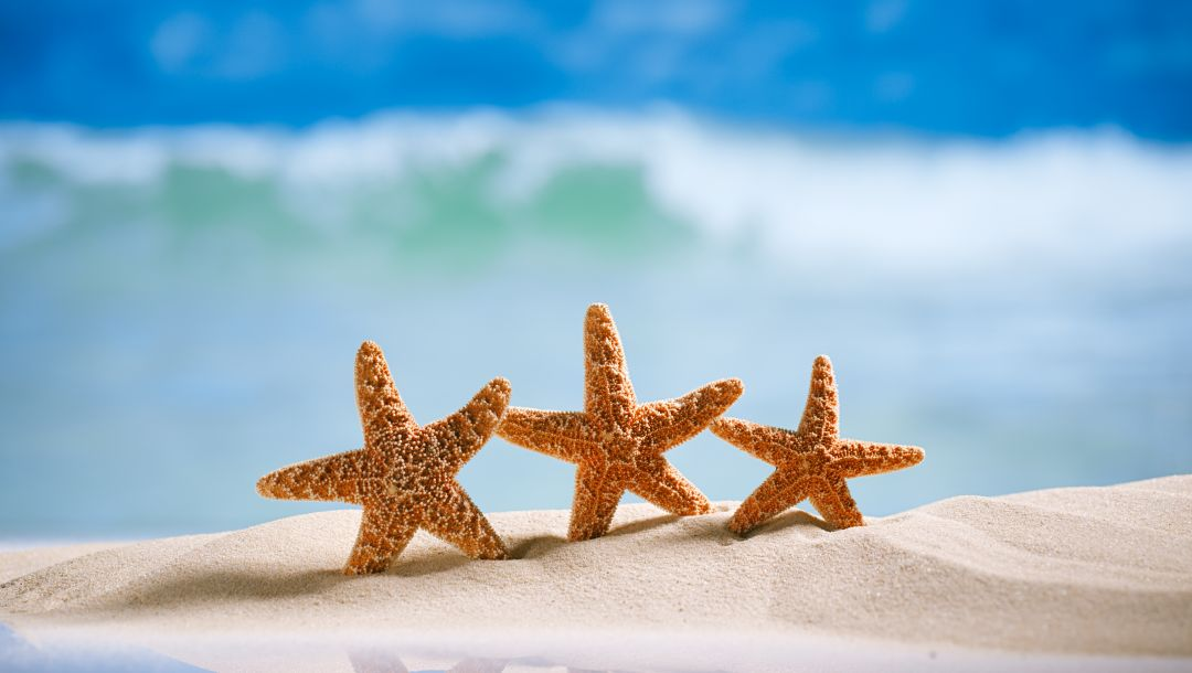 starfishes,summer,beach,sand,vacation
