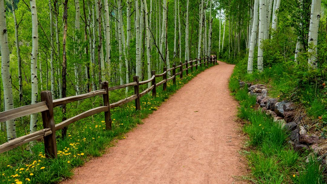 park,walk,grass,forest,spring,path,Road,trees