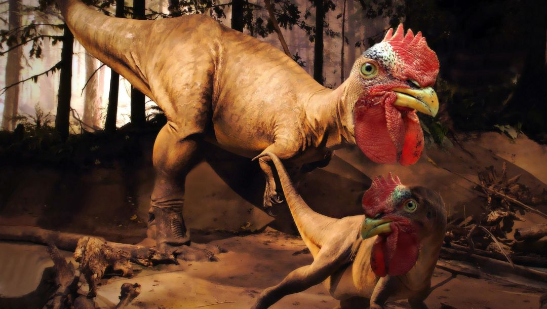 dinosaur,Rooster rex,invented