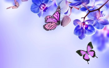 цветы,blue,butterflies,beautiful,орхидея,Orchid