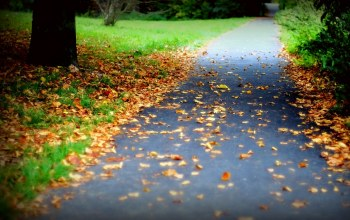 leaves,trees,forest,fall,Road,autumn,colorful,colors,walk,path,park