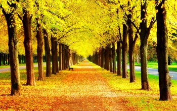 trees,Road,walk,bench,park,leaves,colors,grass,autumn