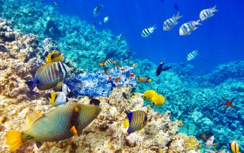 reef,coral,World,подводный мир,underwater,tropical,ocean,fishes