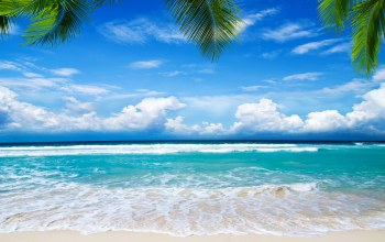 sand,palms,summer,tropical,beach,paradise,shore