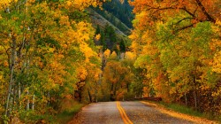 nature,trees,park,colorful,walk,Road,path,fall,forest,colors,leaves,autumn,листья