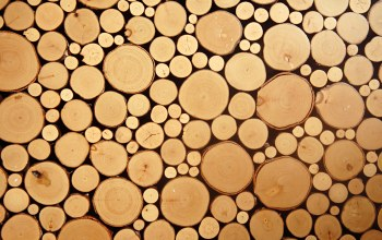 wood,circles,cut logs
