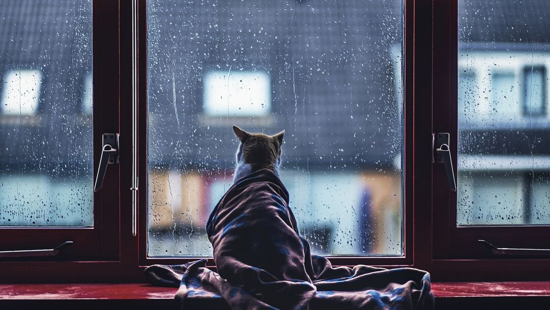 rain,cat,glass,blanket,Animal,situation,drops,Window,covered
