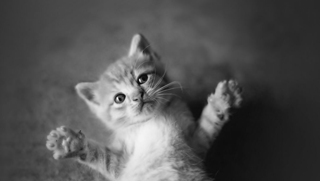 animals,kittens,cute,black and white,Cats