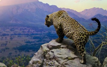 sky,moutains,Cats,Jaguar