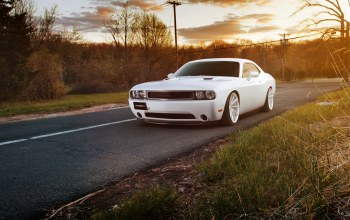 Dodge challenger,White,челленджер