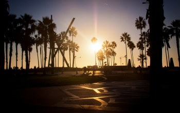 los angeles,palm,Sunset,california,summer,venice beach