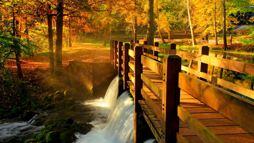 leaves,autumn,water,river,park,fall,bridge,view,forest,walk,trees,alley