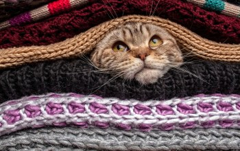 sweater,head,funny,wool,covered,cute,eyes,Mustache,Animal,gaze,situation,nose,cat