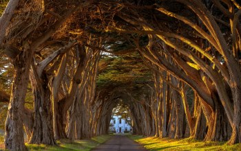 trees,point,Tunnel,cypress,marconi,Sunset,california,reyes,tree, light,station