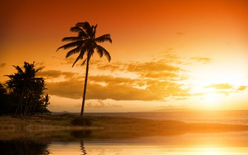 sky,landscape,Hawaii,clouds,beautiful,tropical,palm tree,ocean,scenery sunset