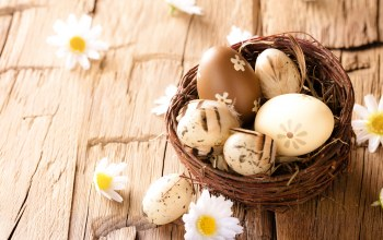 eggs,wood,яйца,Easter,Camomile